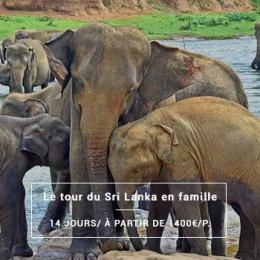 Le grand tour du Sri Lanka en famille