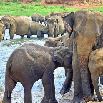 Voyage Nouvini : Sri-Lanka Voyage de Noces