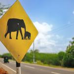 Panneau éléphants