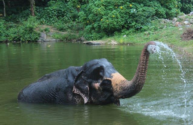 Elephant Sri Lanka Riviere