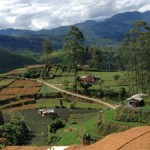 Vallées de thé au Sri Lanka