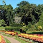 Jardin botanique Perradeniya, Sri Lanka