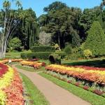 Jardin botanique Perradeniya au Sri Lanka