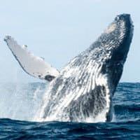 Baleine Sri Lanka