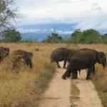 Parc National de Yala au Sri Lanka : Safari