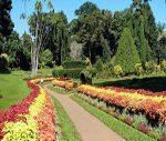 Jardin botanique Peradeniya au Sri Lanka