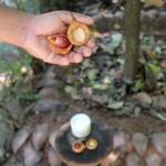 Jardin des épices au Sri Lanka