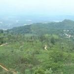 Sri Lanka : Plantations Thé Nuwara Eliya