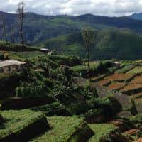 Vallée de Thé Sri Lanka