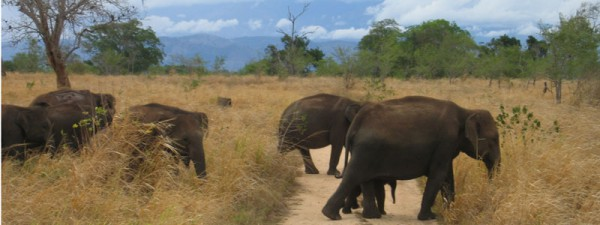 yala-national-park-600x225