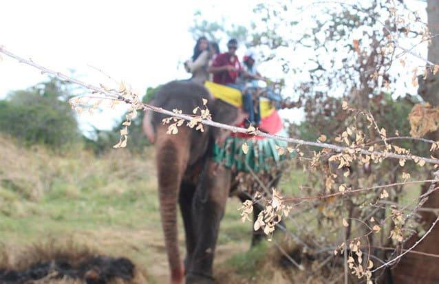 Balade Elephant Sri Lanka