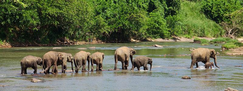 Sri Lanka : Parc National Uda Walawe